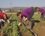 Μέτρα στήριξης των παραγωγών κηπευτικών ζητούν 43 βουλευτές του ΣΥΡΙΖΑ-ΠΣ